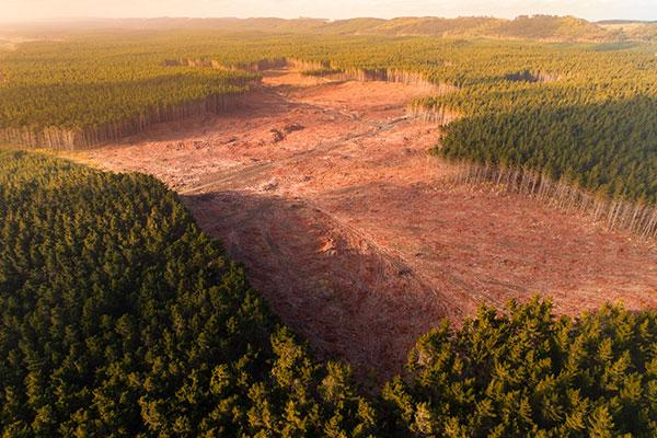 proteger-bosques-manejo-sostenible