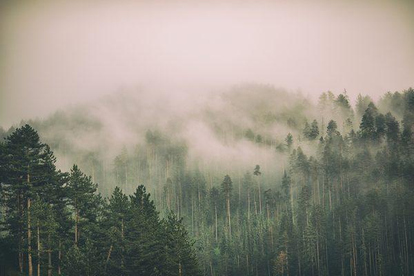 uneatlantico-bosques-carbono