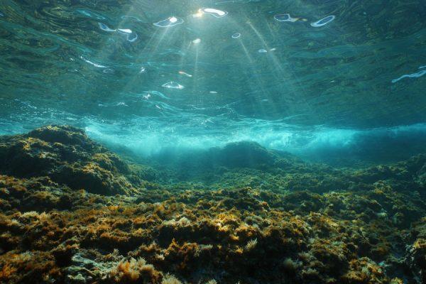 uneatlantico-algas-antartida