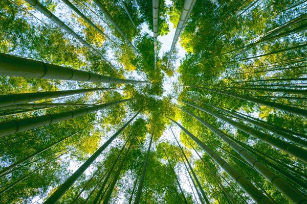 uneatlantico-bambu-plastico-alternativa