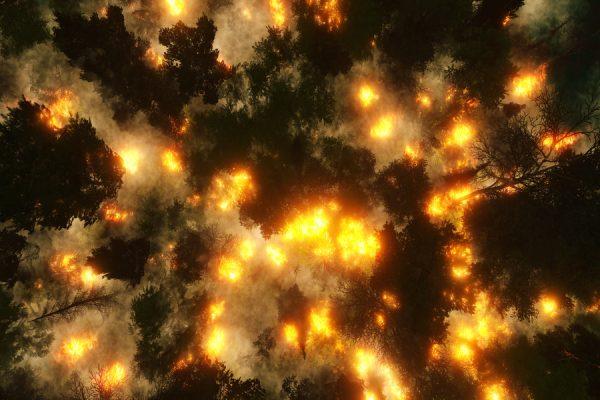 uneatlantico-incendios-amazonas